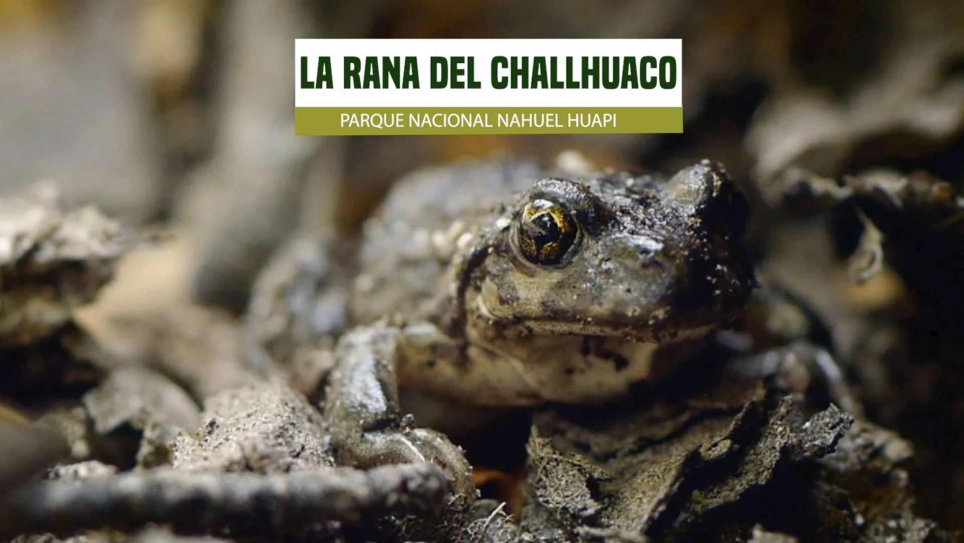 La UNRN participa del International Environmental Documentary Film Festival